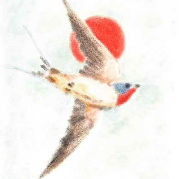 """Barn Swallow"""