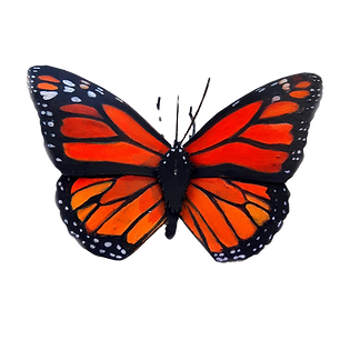 Monarch%20Butterfly_cutout_edited.png