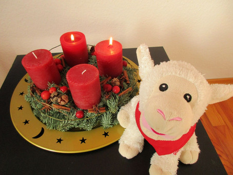 Wolli am 2.Advent