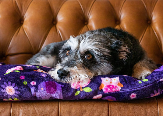 Doggy Duvet