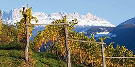 alto-adige-mountain-vineyard.jpg