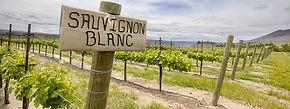 sauvignon-blanc-white-wine-guide.jpg