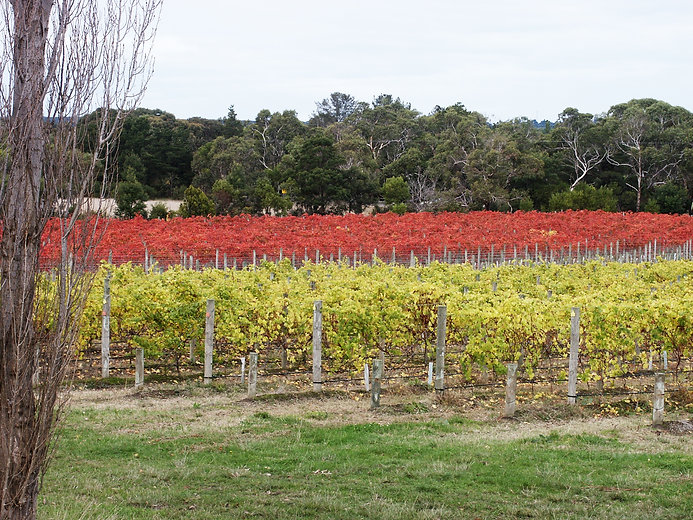 Bittern Estate Italian Variety Vineyard