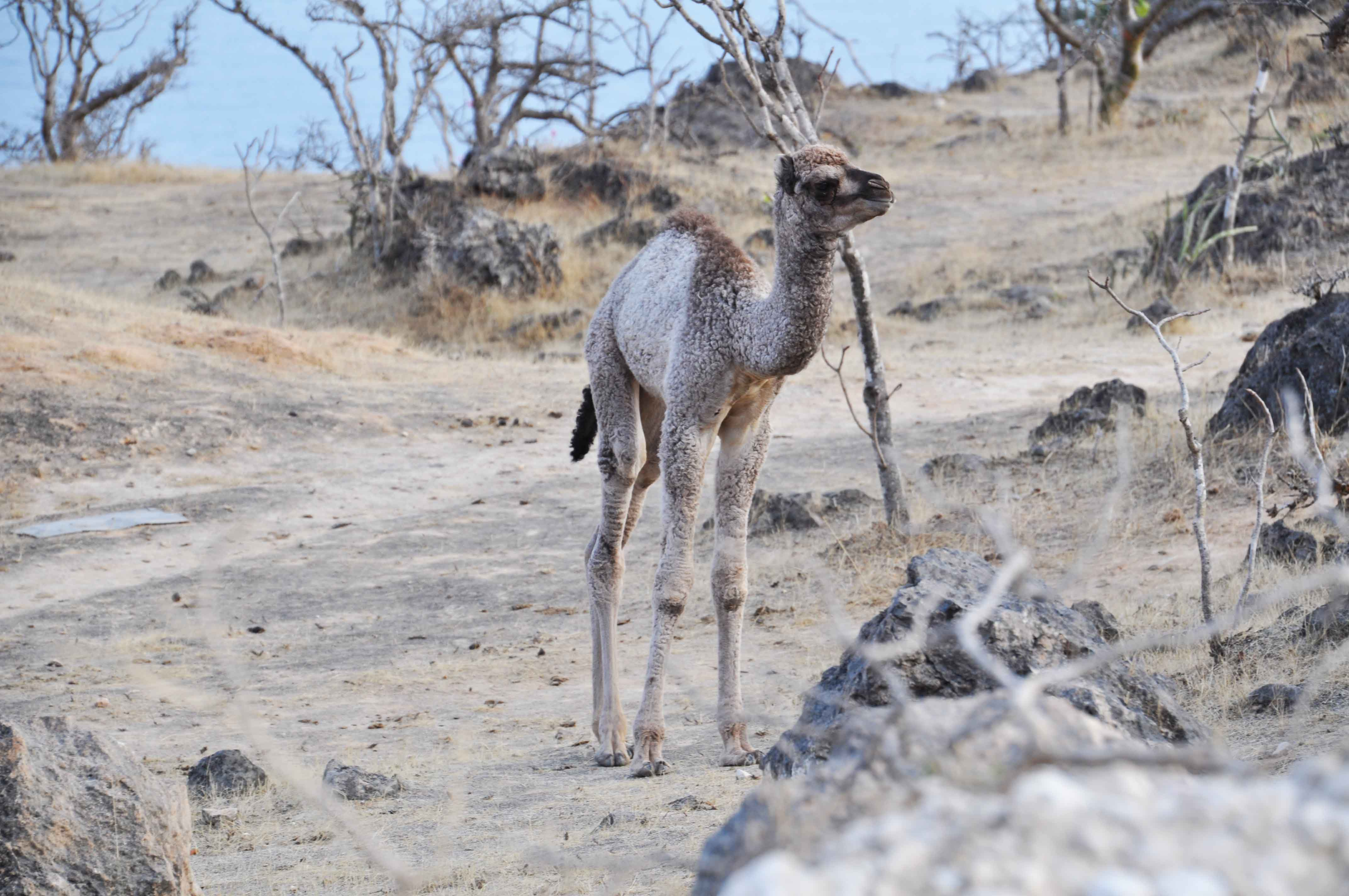 Mughsayl, Oman