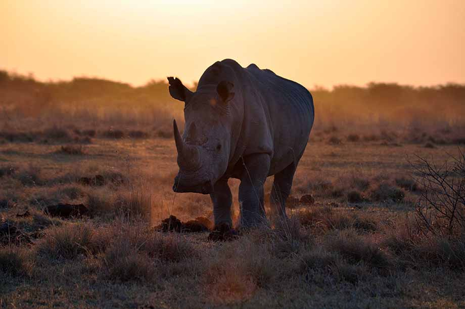 Rhino Park, Botswana
