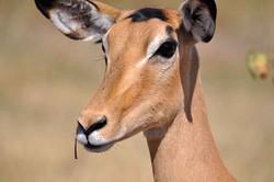 Parc National de Moremi, Botswana
