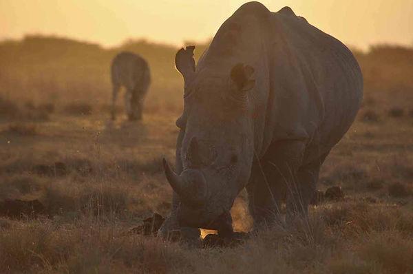 Rhinoceros_Botswana.jpg