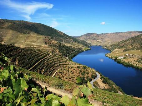 Wine 'Region' & Reason