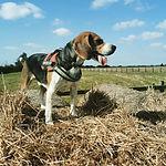 Woodcroft Road Dog Park.jpg