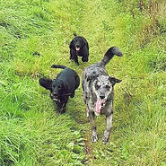 Dog Running Together Play Session. The Dog Play Co