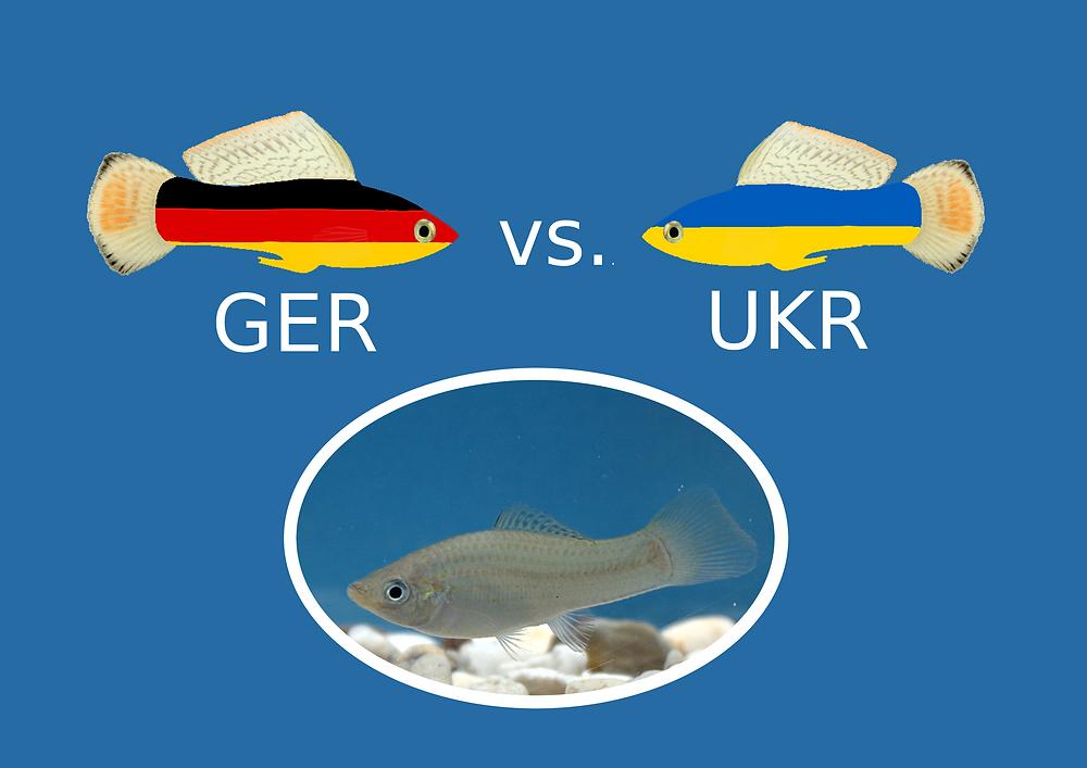 Vorhersage Deutschland vs. Ukraine