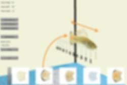 FishCreator aus dem Virtual Fish Project