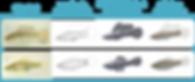 Design des virtuellen Fischs für das Virtual Fish Project