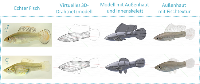 Design des virtuellen Fischs für das Virtual Fish Project