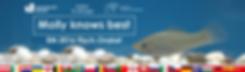 Titelbild für Molly das EURO 2016 Fisch-Orakel