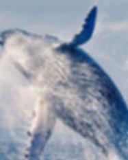 Whale-jump-1500x609.jpg