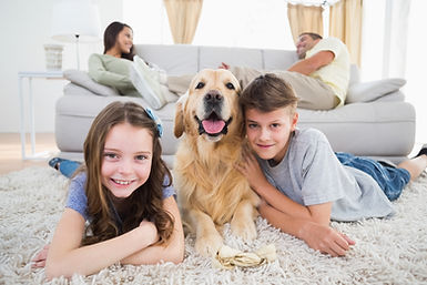Pet Urine Odor and Stain Removal Service in Grand Rapids MI