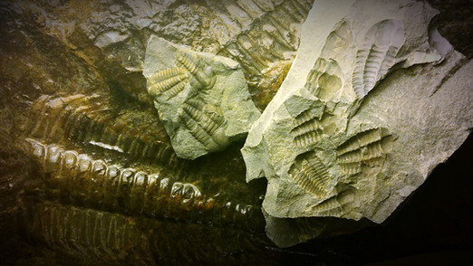 Fossils in Jince