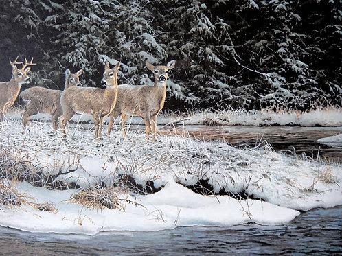 """""""Honey Creek Whitetails"""" by Bonnie Marris, LE Print"""