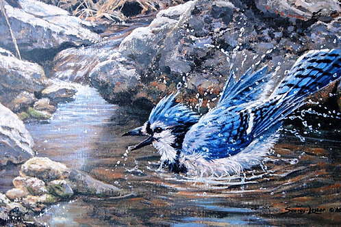 """Bathing Blue Jay"" by John Seerey-Lester, LE Print"