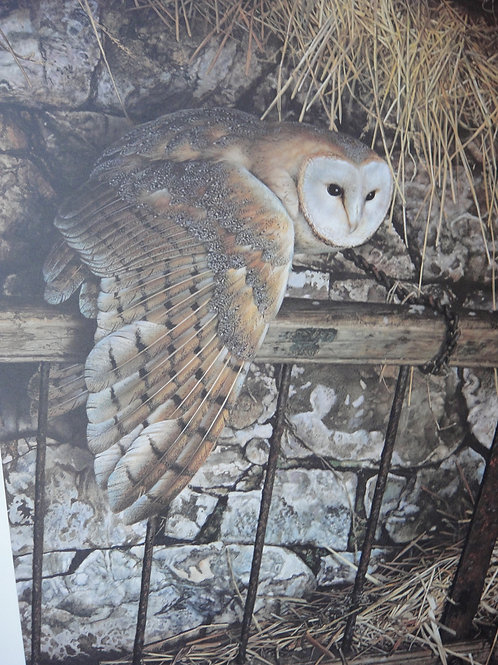 """""""Mysterious Visitor - Barn Owl"""" by Carl Brenders, LE Print"""