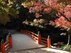 宮島観光、宮島の紅葉、紅葉谷公園、御手洗、岩惣