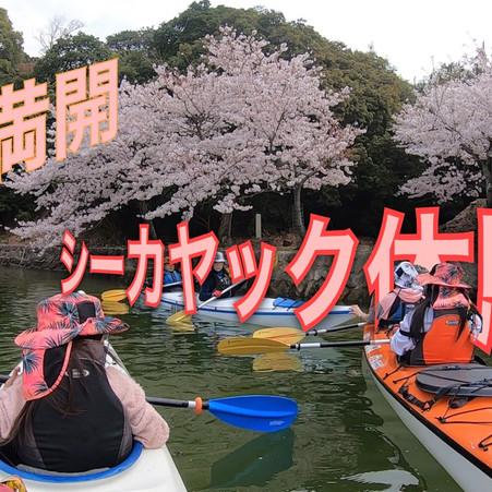 2021春の宮島!桜満開(^^)シーカヤック体験がオススメ!広島・宮島観光オススメ!