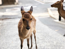 宮島の深緑をめぐる/宮島観光のオススメ/散策