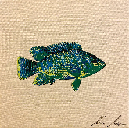 Peacock Cichlid Canvas