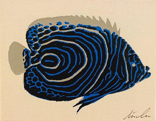 Emperor Angelfish Canvas