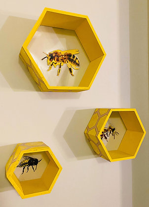 Bee Honeycomb Shadow Boxes