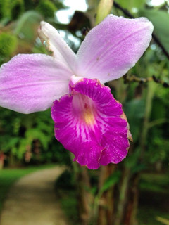Monteverde Orchid Garden, Costa Rica