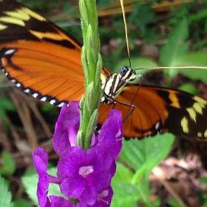Butterfly - Costa Rica.jpeg