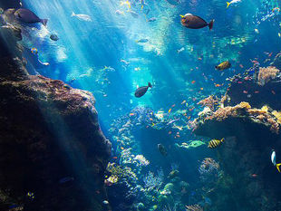 Philippine Sea.jpg