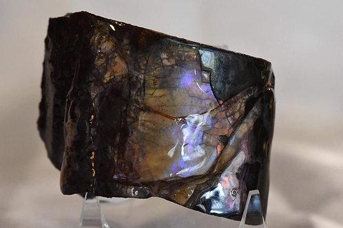 Ammolite - Colorado