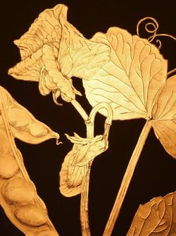 Pisum sativum var. saccharatum