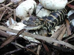 Reptile Breeding (1)