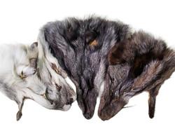 FOX HEADS