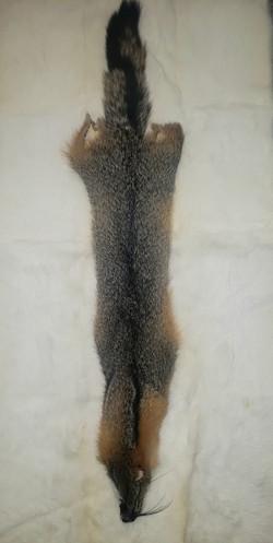 AMERICAN GREY FOX SKIN