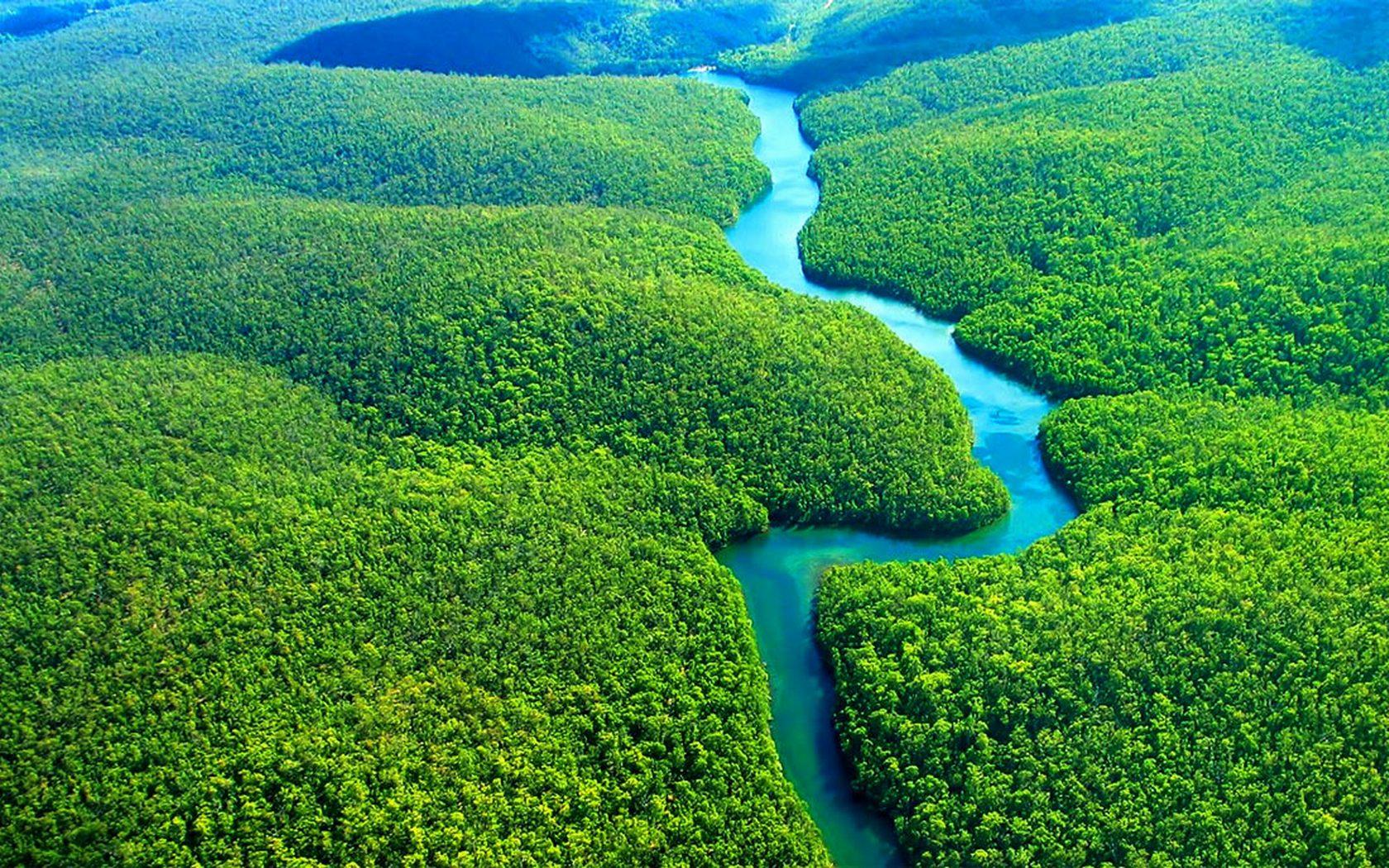 Amazon Florest