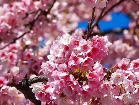 るん るん Spring ‼Pink‼→メンズ ビジネススタイル