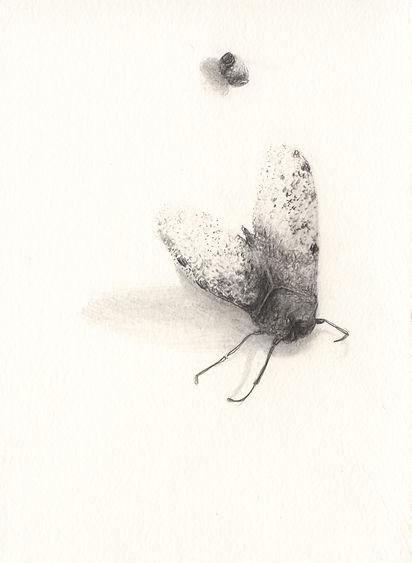 080415deadinsect4.jpg