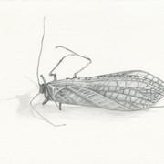 080415deadinsect13.jpg