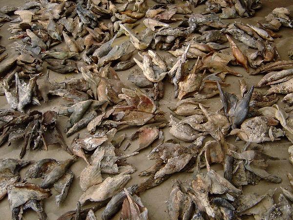Scharnagl Clay Pigeon1.jpg