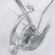 skeletil_bird01_2 copy.jpg