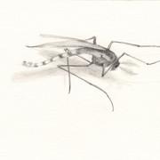 080415deadinsect12.jpg