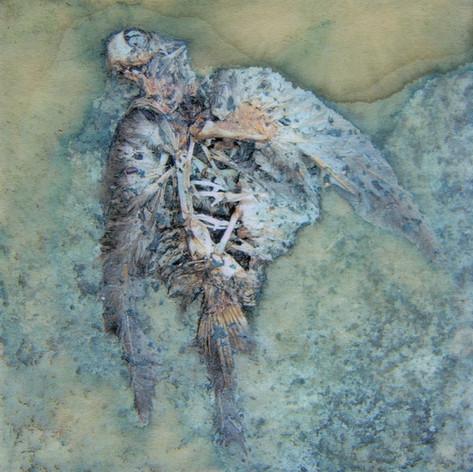 2008 Interrupted Migration (Dove).jpg