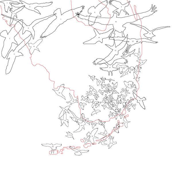 tracings down.jpg