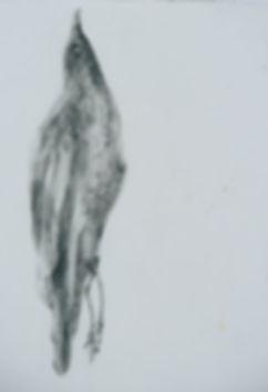 SCHA00-R1-E017_2.JPG