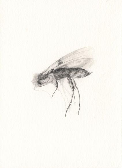 080415deadinsect10.jpg